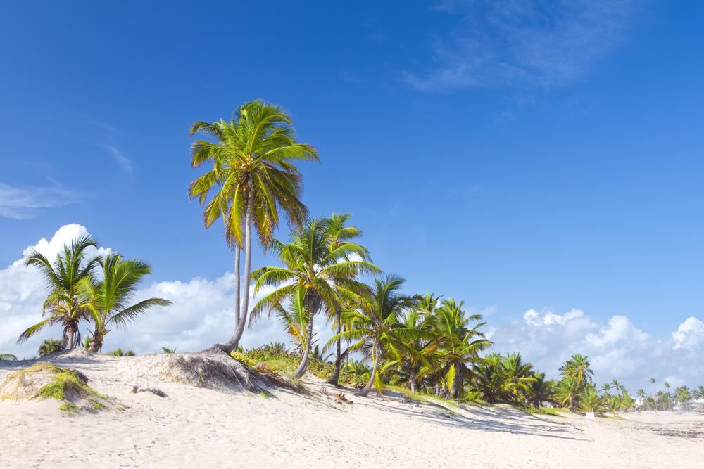 Palm trees on Bavaro Beach