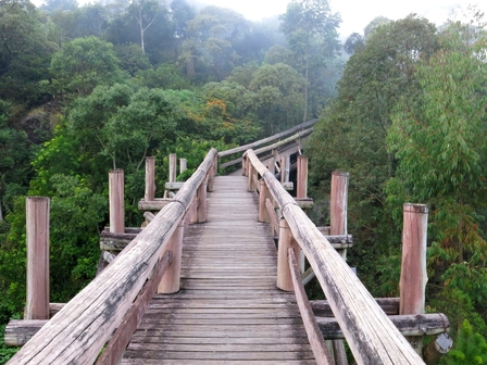 TheAmazon in Brazil, a tourist eco footbridge