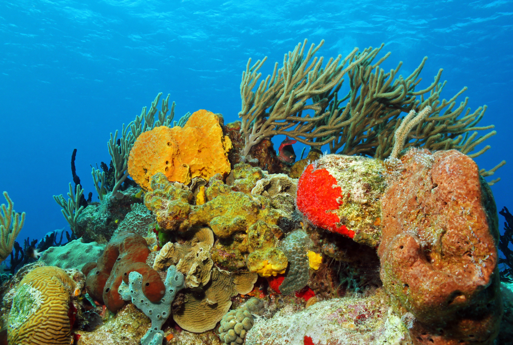 Corals against surface