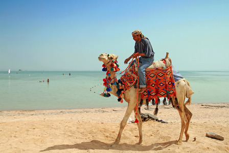 Sharm el Sheikh camel on the beach