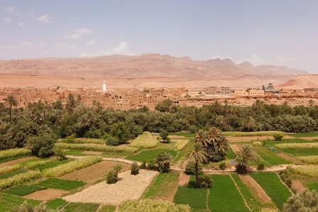 Desert oasis Erfoud Morocco