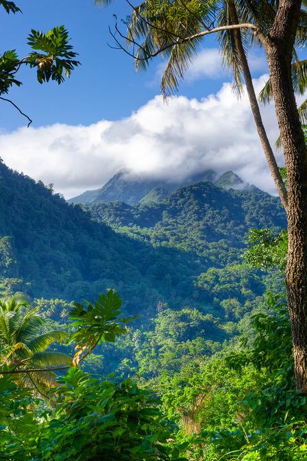Edmund Forest St. Lucia