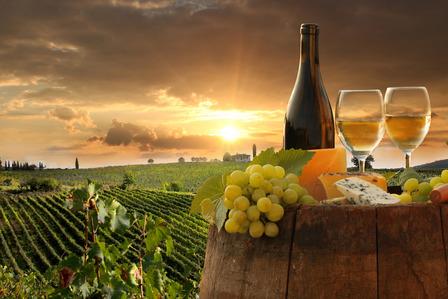 tuscany italy vinyards
